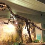 Megalosaurus skeleton scaled