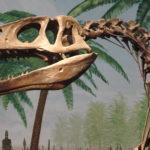 Megalosaurus skull scaled