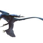 Microraptor fly