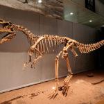 Monolophosaurus skeleton