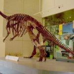 Muttaburrasaurus skeleton 1