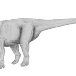 Muttaburrasaurus taking a step