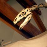 Nothronychus skull