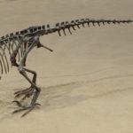 Ornitholestes skeleton scaled