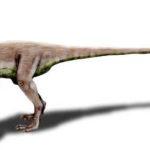 Ornitholestes walking
