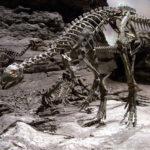 Othnielia skeleton