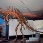 Ouranosaurus skeleton scaled