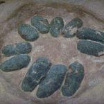 Oviraptor eggs