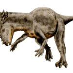 Pachycephalosaurus restore
