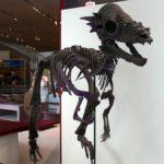 Pachycephalosaurus skeleton
