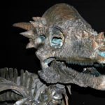 Pachycephalosaurus specimen