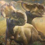 Pachyrhinosaurus two scaled