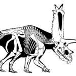 Pentaceratops sketch skeleton