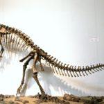 Plateosaurus skeleton scaled