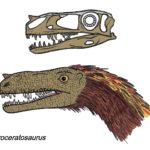 Proceratosaurus head and skull
