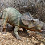 Protoceratops in the wild