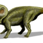 Protoceratops left side