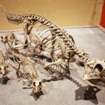 Psittacosaurus skeleton family scaled