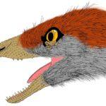Sinosauropteryx head