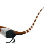 Sinosauropteryx left view