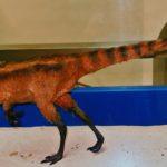 Sinosauropteryx model scaled