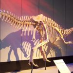 Sinraptor skeleton
