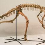 Staurikosaurus skeleton