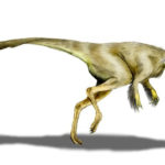 Struthiomimus feathered