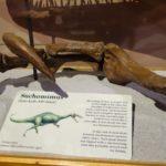 Suchomimus arm scaled