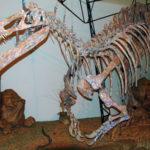 Suchomimus skeleton