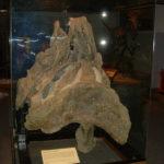 Supersaurus pelvis
