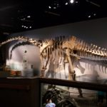 Supersaurus skeleton