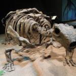 Talarurus skeleton scaled