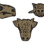 Tarchia skull