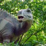 Tenontosaurus head
