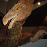 Therizinosaurus head