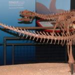 Thescelosaurus back skeleton