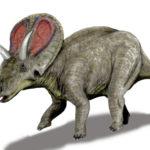 Torosaurus left view