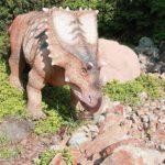 Triceratops sunbathing