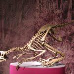 Unenlagia skeleton scaled