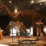 Yangchuanosaurus skeleton scaled