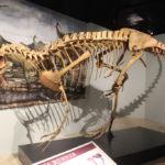deltadromeus skeleton