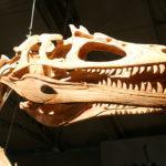 deltadromeus skull