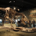 gorgosaurus skeleton