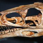 masiakasaurus skull