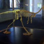 Alvarezsaurus skeleton