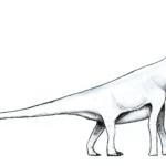 Amygdalodon long neck