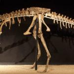 Anserimimus skeleton scaled