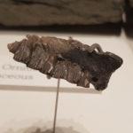 Atlascopcosaurus tootj