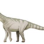 Bellusaurus walking